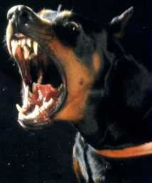 gaurd dog 4