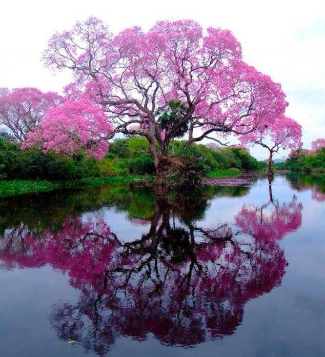 a beautiful TREE