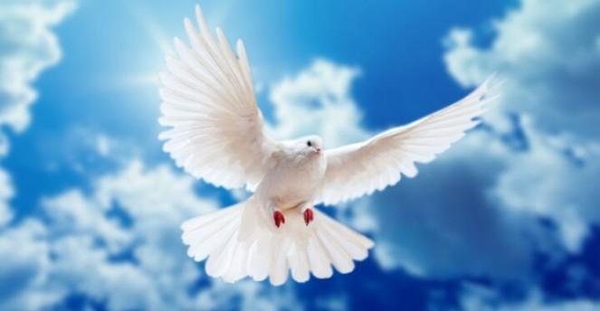 dove flying.jpg