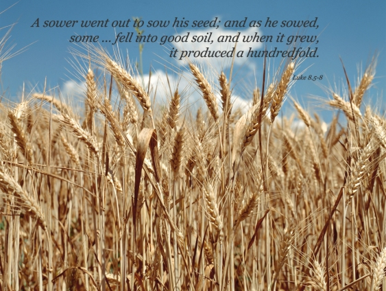 a bible poster 3 harvest.jpg